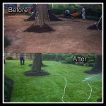 sod-before-after-2